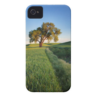 Lone tree surrounded by rolling hills of wheat 2 iPhone 4 Case-Mate cases