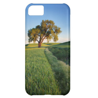 Lone tree surrounded by rolling hills of wheat 2 iPhone 5C case