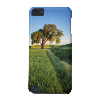 Lone tree surrounded by rolling hills of wheat 2 iPod touch (5th generation) case