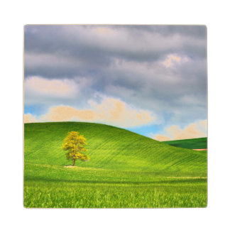 Lone tree surrounded by rolling hills of wheat wood coaster