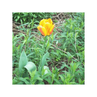 Lone Tulip Stretched Canvas Print