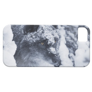 Lone wolf in snow barely there iPhone 5 case