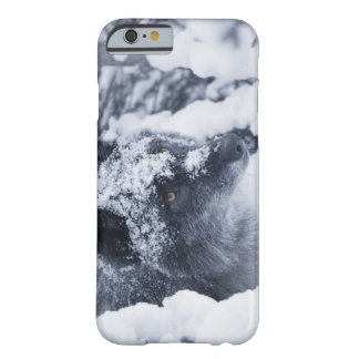 Lone wolf in snow barely there iPhone 6 case