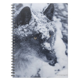 Lone wolf in snow notebook