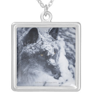 Lone wolf in snow silver plated necklace