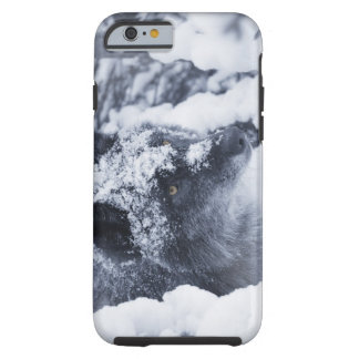Lone wolf in snow tough iPhone 6 case