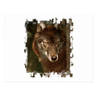 Lone wolf post cards