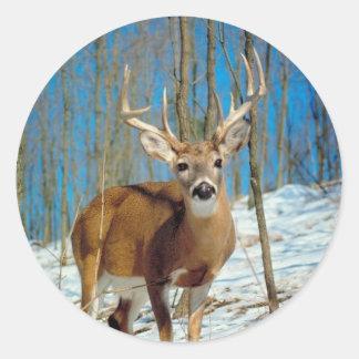 Loneley Reindeer Round Sticker