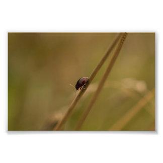 Lonely Beetle Photo Print