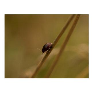Lonely Beetle Postcard