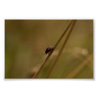 Lonely Beetle Poster