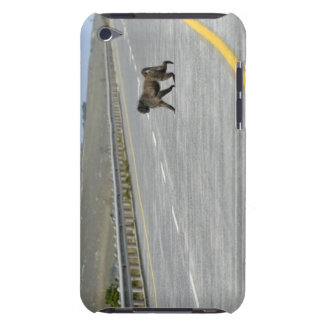 Lonely Chacma baboon crossing highway road Barely There iPod Cover
