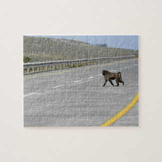 Lonely Chacma baboon crossing highway road Jigsaw Puzzle