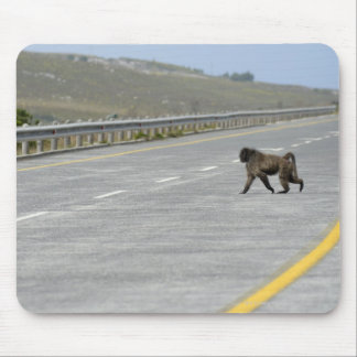 Lonely Chacma baboon crossing highway road Mouse Pad