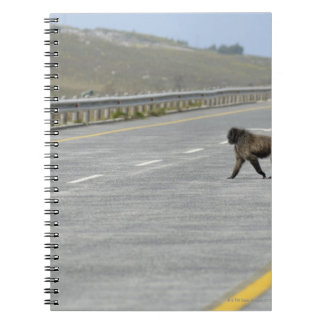 Lonely Chacma baboon crossing highway road Notebooks