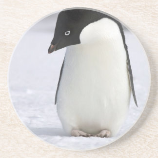 Lonely Penguin Coaster