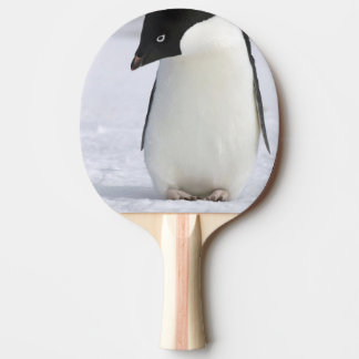Lonely Penguin Ping-Pong Paddle