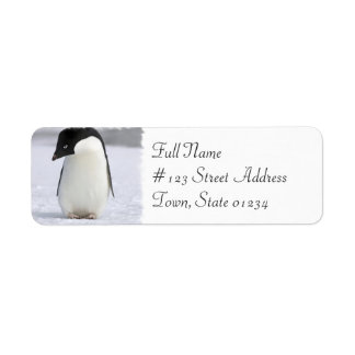 Lonely Penguin Return Address Mailing Label Return Address Label