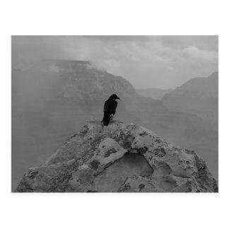 Lonely Raven Postcard