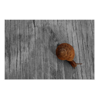 Lonely Snail Print