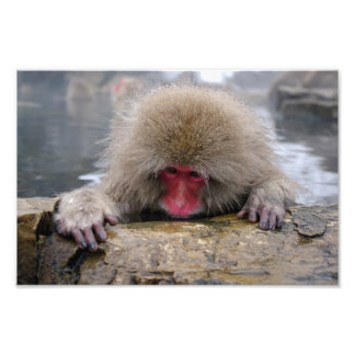 Lonely snow monkey in Nagano, Japan Photo Print