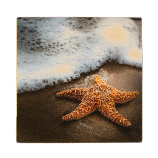 Lonely Starfish On The Beach Wood Coaster