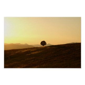 Lonely tree in a field poster