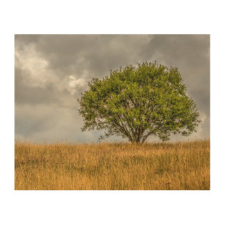 Lonely tree landscape in Consett Wood Wall Art