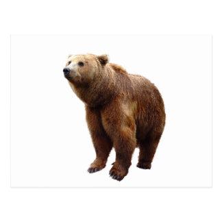 Lonesome bear postcard