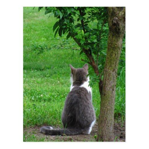 Lonesome Kitty calendar ~ postcard