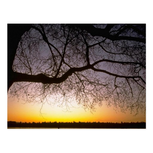 Lonesome Tree Post Card