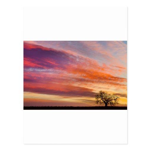 Lonesome_Tree_Sunrise.jpg Post Card