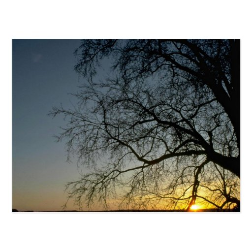 Lonesome Tree Without Leaves Postcards
