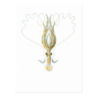 Long-armed Squid Postcard