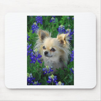Long Coat Chihuahua in Blue Bonnets Mouse Mat