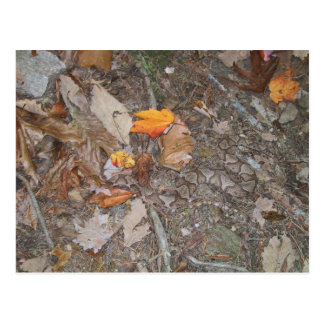 Long Copper Head Snake On Autumn Leaves At Forest Post Card