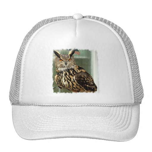 Long Eared Owl Baseball Hat