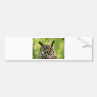 Long Eared Owl Bumper Sticker