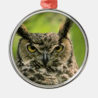 Long Eared Owl Christmas Ornament