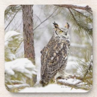 Long eared owl coaster