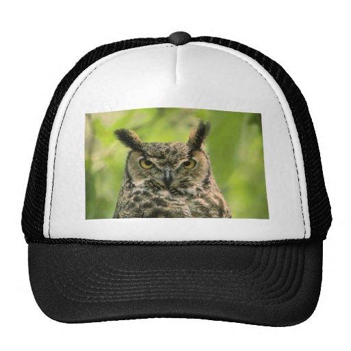 Long Eared Owl Trucker Hats