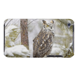 Long eared owl iPod Case-Mate cases