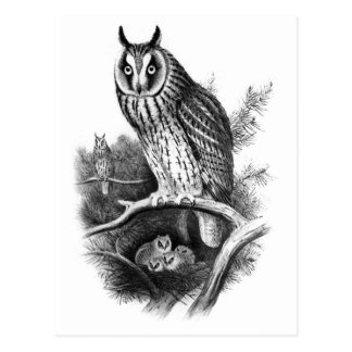 Long-eared Owl Sketch Post Cards