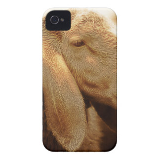 Long Eared Sheep Dolomites, Italy iPhone 4 Case
