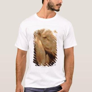Long Eared Sheep Dolomites, Italy T-Shirt