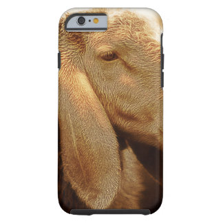 Long Eared Sheep Dolomites, Italy Tough iPhone 6 Case