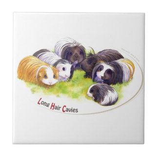 Long Hair Cavies Small Square Tile