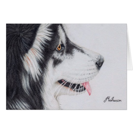 Long Haired Alaskan Malamute Card