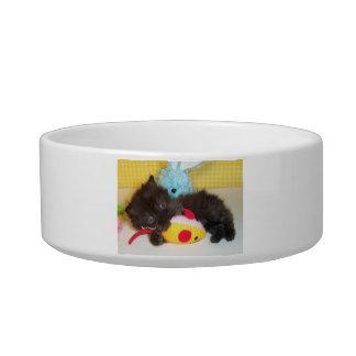 Long Haired Black Kitten Cat Pet Bowl