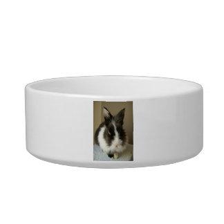 Long Haired Bunny Rabbit Pet Bowl